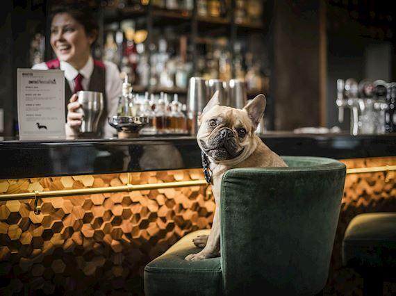 Dog-friendly Bar in London