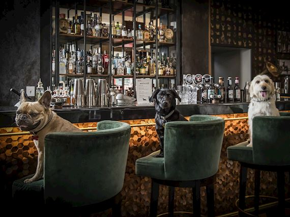 Dog Friendly Bar in Mayfair - Dog Cocktails