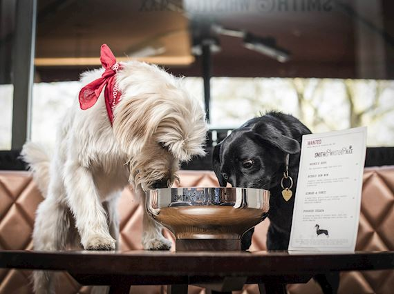 Dog-friendly bar in London - Dogtails